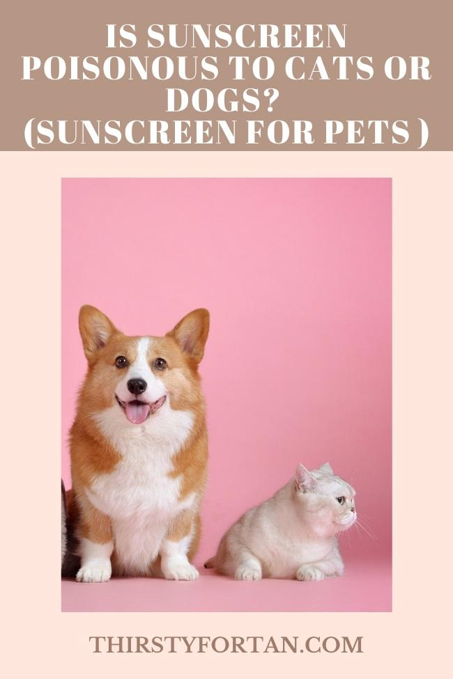 Is Sunscreen Poisonous to Cats or Dogs pin by thirstyfortan